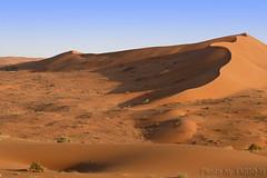 Desert Dunes- Explore Front Page (TARIQ-M) Tags: shadow texture landscape sand waves desert dunes explore frontpage riyadh saudiarabia       canonef70200mmf4lusm   canon400d