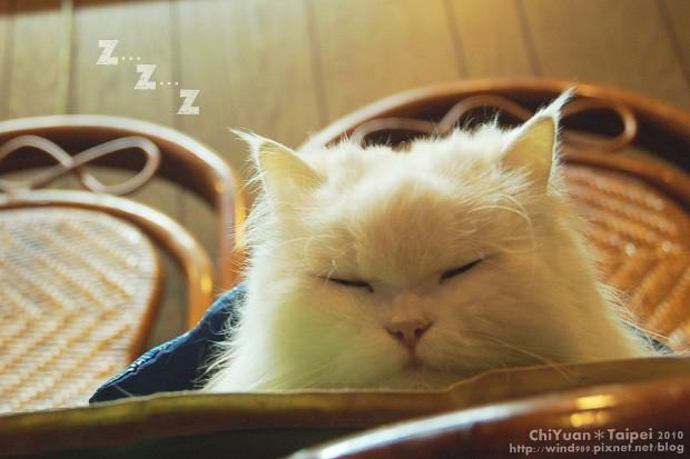 [Cat]叮叮。寒冬好眠01.jpg