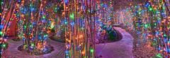 In the land of the Ant King (JoelDeluxe) Tags: newmexico lights albuquerque nm joeldeluxe rol botanticalgarden biopark pnm riveroflights