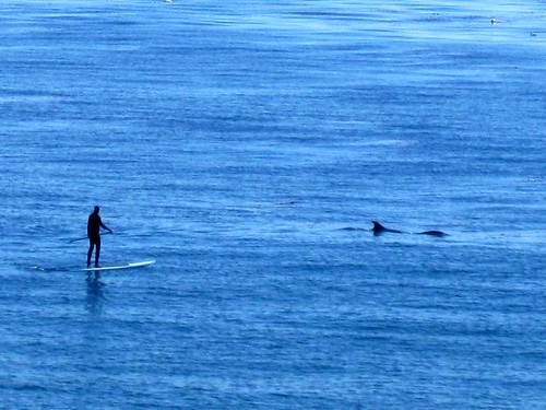 dolphins and paddlers