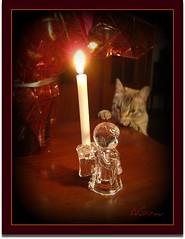 ...y...esto...¿se come? (AGirau ...) Tags: adorno luz angel navidad flickr gato vela dongato cristal motivo gatocurioso motivonavideño agirau
