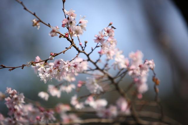寒中の春色彩