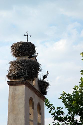 Storks on a Church