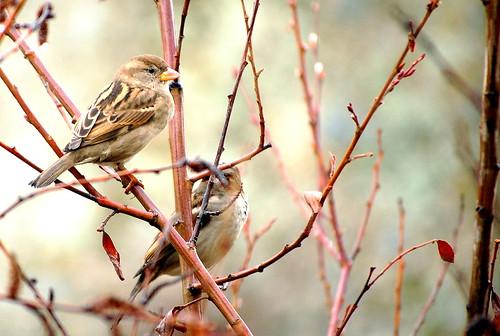 2/ 52 los pájaros se acercan a mi ventana