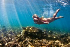 (Micah Camara) Tags: ocean portrait beach girl swim hawaii underwater turtle dive kauai housing honu