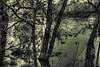 Ebro Riverside (guailon79) Tags: blackandwhite españa naturaleza white black tree blancoynegro blanco nature water miguel rio angel river arbol duck high spain agua arboles no sony negro rando young ducks zaragoza spanish pato aragon alpha ebro a200 miguelangel range alto hdr gomez rivera patos español ángel dinamico gómez dinamic aficionado nocolor uncolored ebroriver rioebro sonyalpha altorangodinamico sonyalphaa200 turolense calamochino miguelangelgomez miguelangelgomezrando