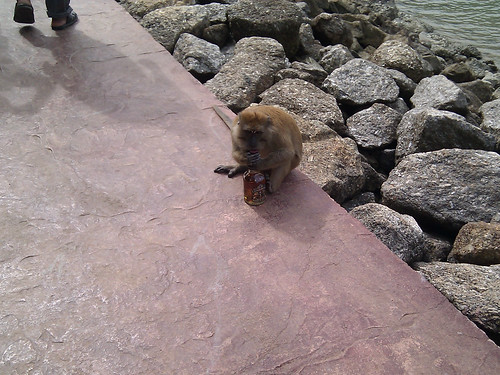Discerning Monkey