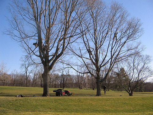 USDA Forest Service Smokejumpers use their tree climbing skills to help USDA APHIS detect trees infested with Asian Longhorned Beetles on the golf course at the Worcester Country Club in Worcester, Massachusetts.