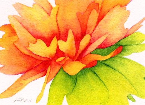 Coreopsis, watercolor