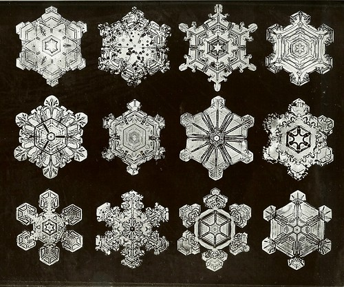 Snow Crystal Photos by W.A. Bentely