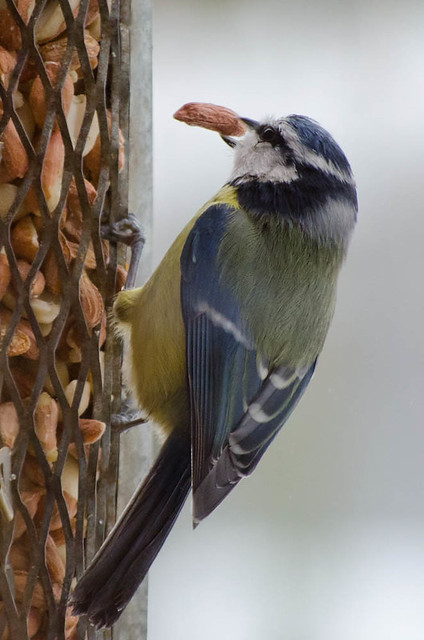 feeding birds_5522.jpg