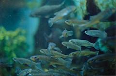(voldy92) Tags: blue fish water boston aquarium massachusetts thiswashardbecausethefishkeptmovingohmygodsoitkeptmessingupwiththefocusandjustfdlksjdfklsjafldksfjbutyeah