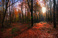Leaves That Are Green... (Fozzeee) Tags: uk november autumn red england brown sunlight green 11 gb berkshire autumnal 2010 inbetween penwood