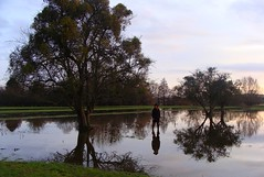 Reflections in the floods. (Zazh *) Tags: tree arbres reflexion reflets floods inondations