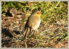 barcelona nature birds wildlife aves ocells viladecans deltallobregat