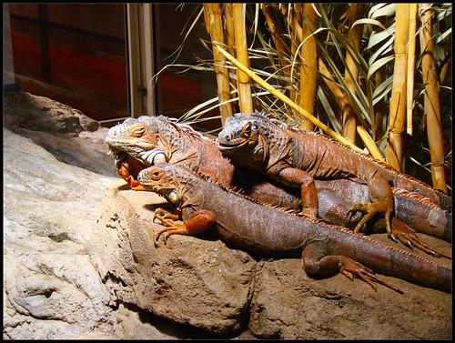 Reptiles y Anfibios Tabernas (2)