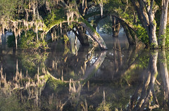 Flooded Oaks in the Mist, North Central Florida (kmalone98) Tags: mist landscapes oaks floods scenics countryroads