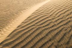 Wind ripples of Khuri sand dunes, near Jaisalmer, India (travelingmipo) Tags: travel photo india asia     rajasthan   hotelpleasanthaveli  tour daytrip   desert dune safari  khuri thar  windripples    dunes desertnationalpark camelsafari