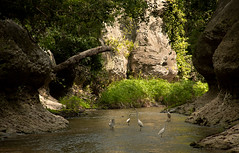 Le ballet des aigrettes (zimbart) Tags: archway cheringomaside gorongosanationalpark mozambique africa mueredzi