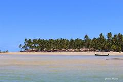Praia dos Carneiros (Carlos Amorim (Camorim10)) Tags: praia carneiros tamandar pernambuco areia gua coqueiro bar bora