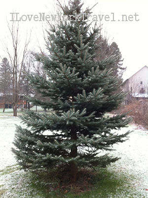 treefirstsnow