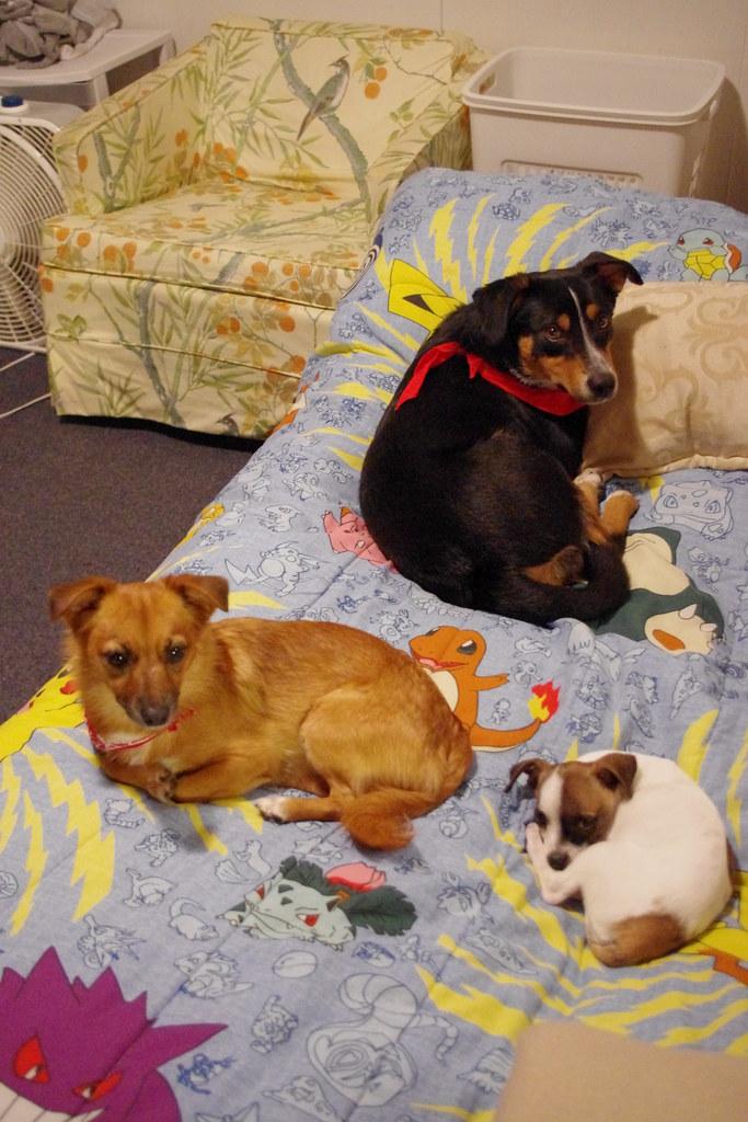Amazing Pom Canine Adorable Dog - 5225128961_4891135c4e_b  Perfect Image Reference_738767  .jpg