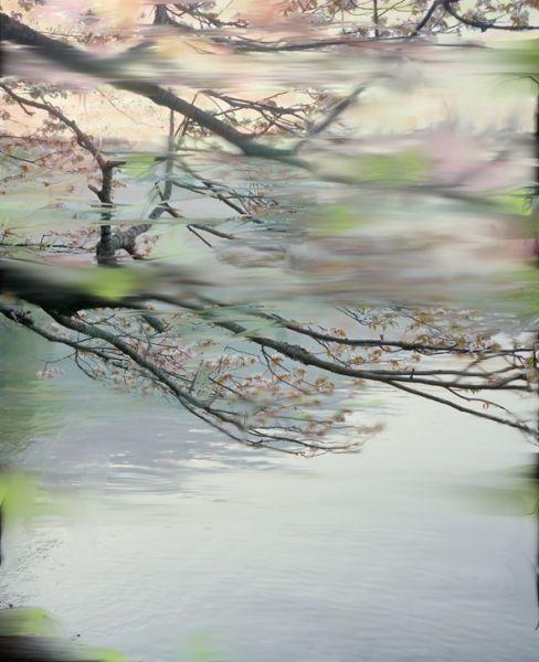 Sandra Kantanen, Untitled Sakura 2, 2009