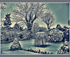 Last Winter - more snow!! (**Hazel**) Tags: garden snowy wildflower ratby photoscape