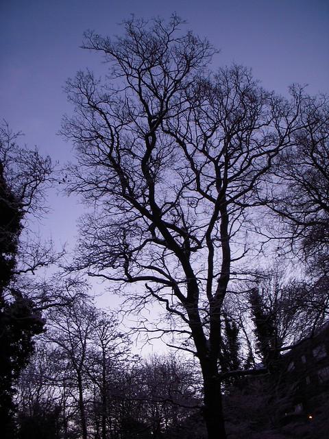 Tree in Scotland