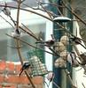 8 Cotton Buds !!!!! (Church Mouse 07) Tags: uk winter nature birds lumix december wildlife 8 panasonic british 2010 inmygarden wildbirds longtailedtits dmcfz28 churchmouse07 fatballsandfatblock