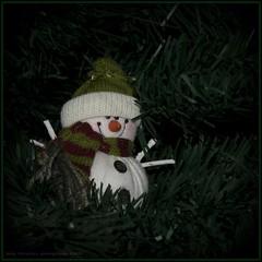 Christmas time (Boby Pirovics) Tags: christmas sony boby a700 alpha700 sonyalpha700 pirovics bobypirovics