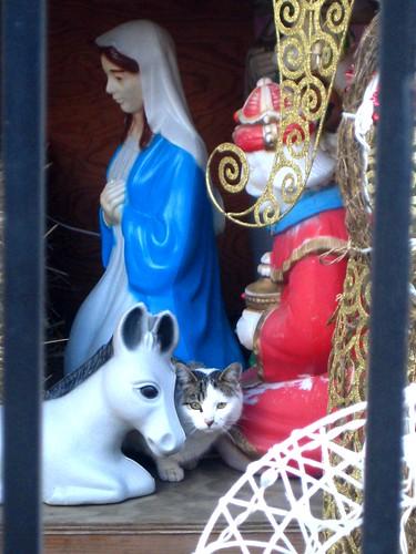 kitty in the manger