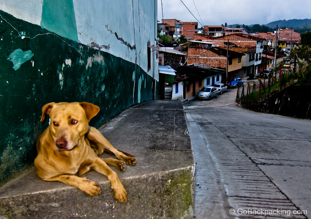 Dog in Guatape, Colombia