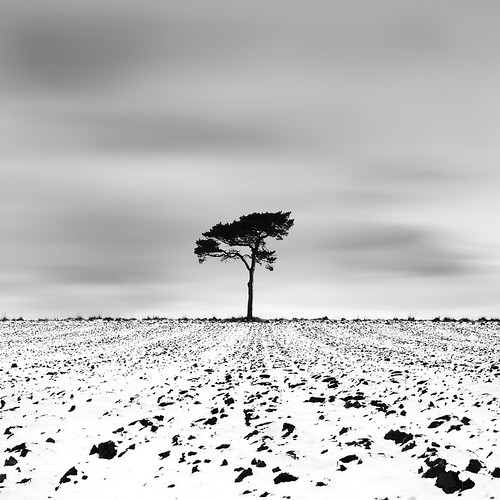 A tree and some snow by Gavin Dunbar