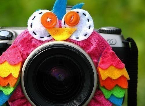 Owl Lens Pet