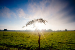 Tree of Hope (Dan Ballard Photography) Tags: sky dan colors beautiful rural sunrise colorado valley stunning ballard rays southeast dreamscape lajunta southeastcolorado danballard souttheastcolorado danballardphotogarphy southeastcolordo