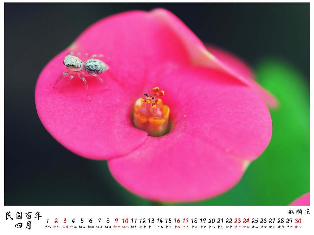 2011 桌曆4 4月