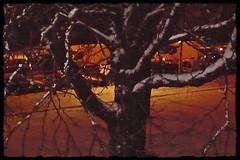 7 - 8 décembre 2010 Maisons-Alfort Il a neigé sur Maisons-Alfort (melina1965) Tags: leica trees winter light snow tree night lumix december îledefrance lumière hiver panasonic arbres neige nuit arbre 2010 décembre valdemarne maisonsalfort theworldthroughmyeyes fx10 photoscape philosophyincolors