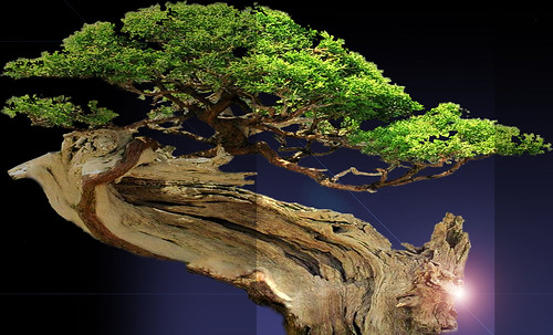 """Bonsai009 • <a style=""""font-size:0.8em;"""" href=""""http://www.flickr.com/photos/30735181@N00/5261346799/"""" target=""""_blank"""">View on Flickr</a>"""