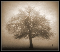 More........... (Digital Diary........) Tags: trees mist texture creative walker toned dogwalker chrisconway