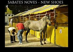 pintar cascos - paint hooves (Miquel Pieras) Tags: horse yellow caballo shoes zapatos amarillo cavall galope sabates miquelpieras