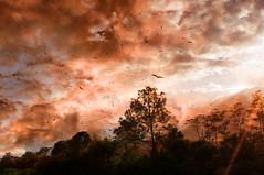 Messengers of Manw (www.LKGPhoto.com) Tags: trees sunset sky birds clouds print explore lotr middleearth turkeybuzzards lkgphotography wwwlkgphotocom
