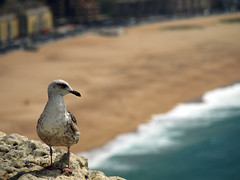 En la playa (Fleming Andrade) Tags: sea praia beach portugal mar seagull playa olympus gaviota zuiko gaivota nazaré 40150 e410