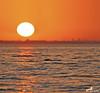 Sunset Flamingo.. (ZiZLoSs) Tags: sunset orange sun canon eos flamingo 7d kuwait usm aziz abdulaziz عبدالعزيز f56l ef400mmf56lusm zizloss المنيع ef400mm 3aziz canoneos7d almanie abdulazizalmanie httpzizlosscom