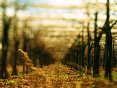 (toby.harvard) Tags: italy blur photography 50mm countryside vineyard dof bokeh perspective explore photograph castellana zuiko puglia freelens freelensing freelensed tobyharvard