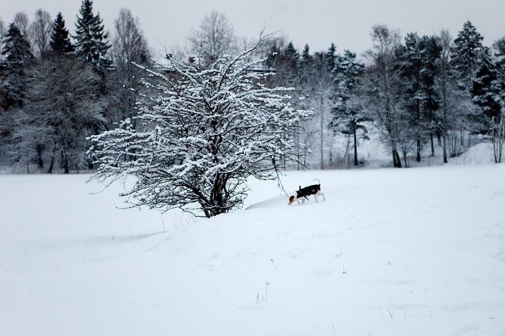 Snö/Hund
