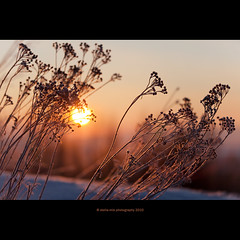 Stella Mia by stella-mia (stella-mia) Tags: pink winter sunset orange sun snow norway sunrise dof bokeh explore frontpage sn 70200mm hightlight platinumheartaward canon5dmkii