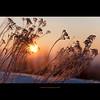 Stella Mia by stella-mia (stella-mia) Tags: pink winter sunset orange sun snow norway sunrise dof bokeh explore frontpage snø 70200mm hightlight platinumheartaward canon5dmkii