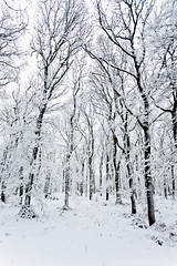 The Fragile Forest II (Wave / Particle / Pixel) Tags: trees winter white snow netherlands forest geotagged frost ethereal magical doorwerth oosterbeek nld provinciegelderland geo:lat=5198776755 geo:lon=