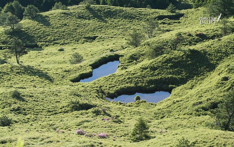 合歡山莊下的小水塘